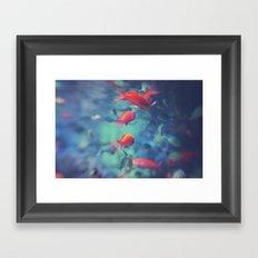 Fish Blur Framed Art Print