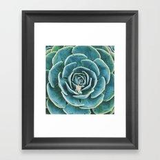 echeveria. succulent photo Framed Art Print