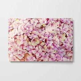 Pink Hydrangea Flower Garden Metal Print