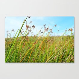 flowers in daylight Canvas Print