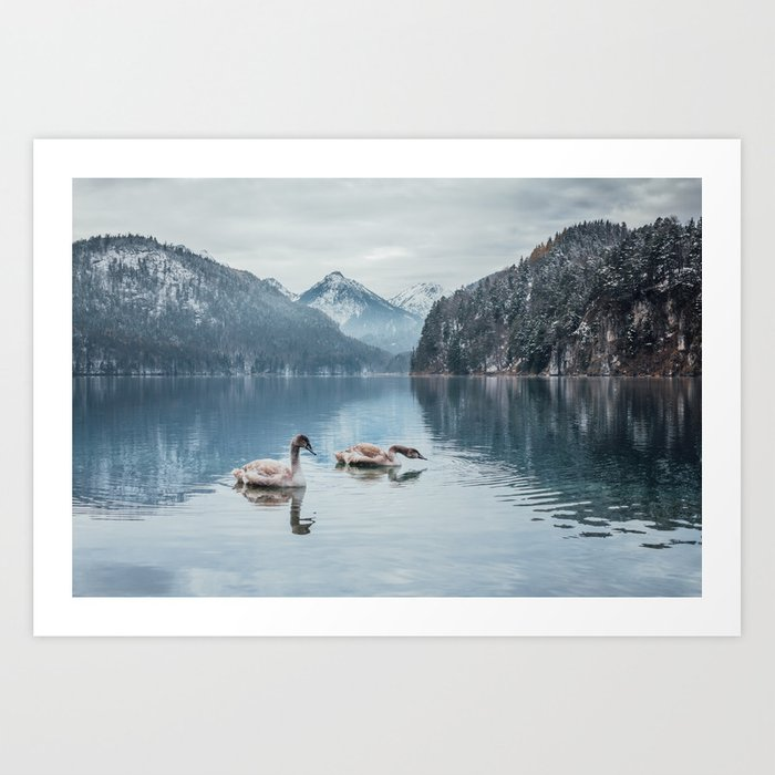 Swans on the Apsee lake, Bavrian alps Art Print