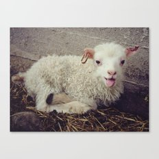 Sheep #5 Canvas Print