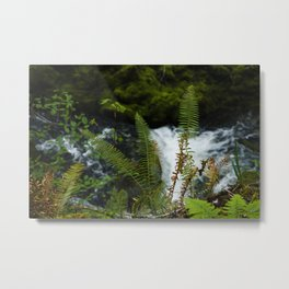 A River Races Beyond Dancing Ferns in Oregon Woods Metal Print