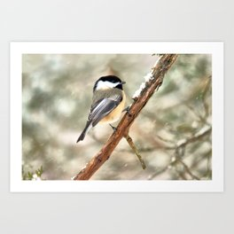 Clinging Chickadee Art Print