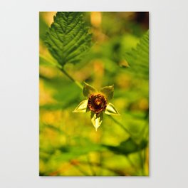 Nature's Star Canvas Print