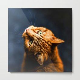 Ginger kitty cat Metal Print