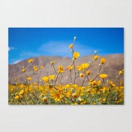 Super Bloom III Canvas Print