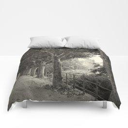 Sycamore 496 (Frankfurt) Comforters
