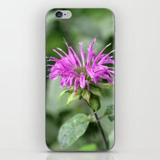Monarda - Bee Balm iPhone & iPod Skin