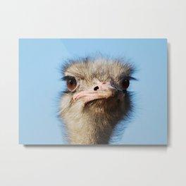 Ostrich the largest bird Metal Print