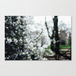 Holland Park #4 Canvas Print