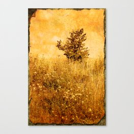 Old Picture of Landscape Canvas Print