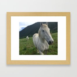 Two White Horses - Sun Valley, Idaho Framed Art Print