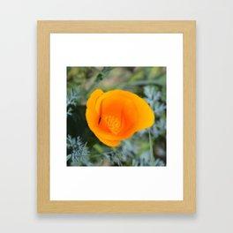 Poppy Petals Framed Art Print