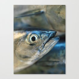 Big eye, tuna, fish, still life, photo, fine art, print, nature, sea, fishing, detail, blue Canvas Print
