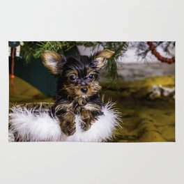 Tiny Yorkie Puppy in a Fuzzy Basket Sitting under a Christmas Tree Rug
