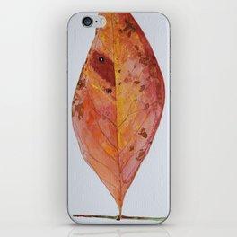 Sedum Aizoon - 10 Nov iPhone Skin