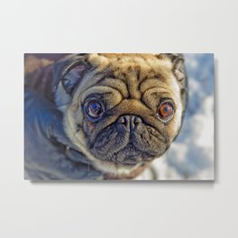 Cute little dog Metal Print
