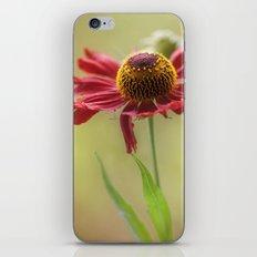 Heleniums iPhone & iPod Skin