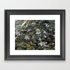 Fallen Blossoms Framed Art Print