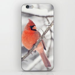 Cardinal in the Snow iPhone Skin