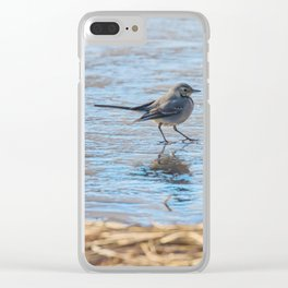 White Wagtail, Cute little bird (Motacilla alba) on ice, frozen pond winter Clear iPhone Case