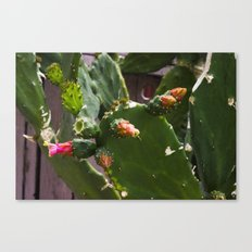 Summer Cactus in Flower Canvas Print