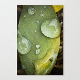 Raindrops on a green leaf Canvas Print
