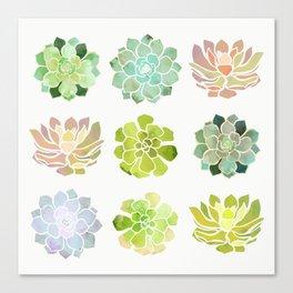 Spring Succulents Canvas Print