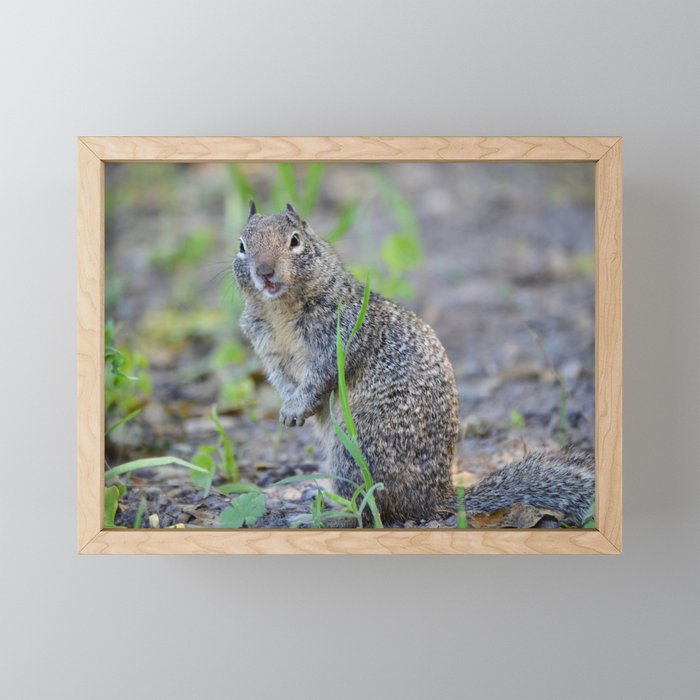 ground squirrel greeting Framed Mini Art Print