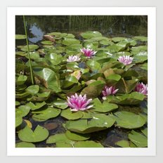 summer garden pond III Art Print