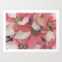 Poinsettia Bushel Pattern Art Print