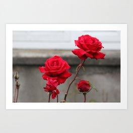 Bright Red Roses Art Print