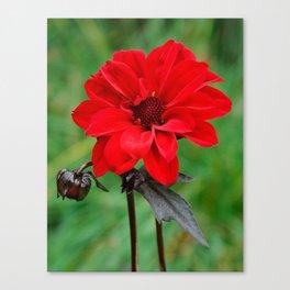 Dahlia 'Bishop of Llandaff' Crimson Red Flower Canvas Print