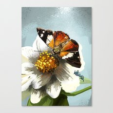 Butterfly on flower 12 Canvas Print