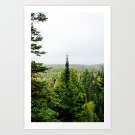 Superior Hiking Trail Pines and Vistas Art Print
