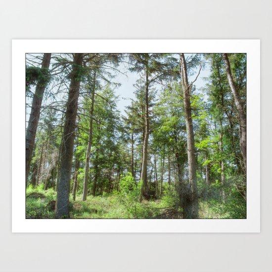 Langsett Forest Art Print