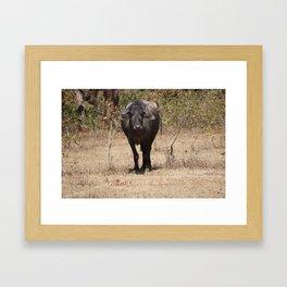 The way of the Buffalo Framed Art Print