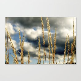 Oregon Gold Canvas Print