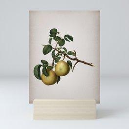 Vintage Pear Botanical on Parchment Mini Art Print