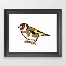 Goldfinch - European Goldfinch Framed Art Print