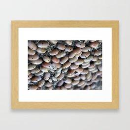 Acorns with Holes No.3 Framed Art Print