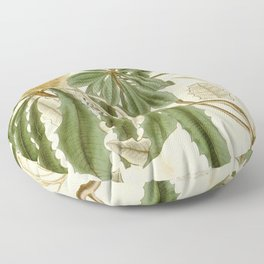 Banksia integrifolia (Coast Banksia) 1827 Floor Pillow