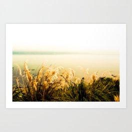 Silver Grass Art Print