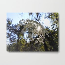 Queen Anne's Lace Metal Print