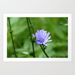 Nature's Garden Purple And Green Art Print