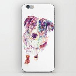 Multicolored Australian Shepherd red merle herding dog iPhone Skin