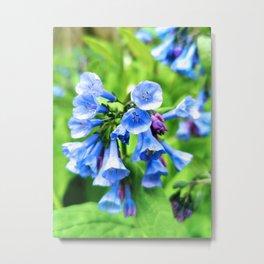 Bluebells 1 Metal Print