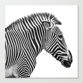 Zebra Photography | Animal Minimalism | Wildlife Art | Black and White Canvas Print