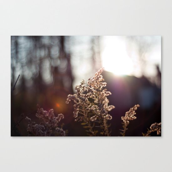Goldenrod Light Canvas Print